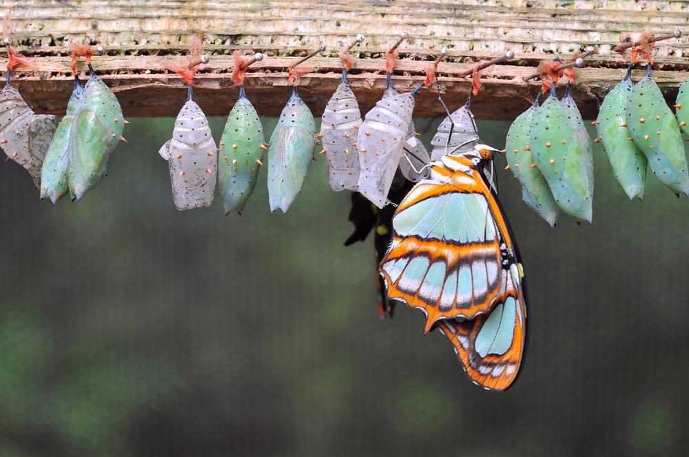 butterfly flourishing